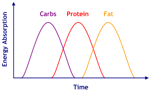 Energy Absorption Rates - Carbs, then Protein, then Fat