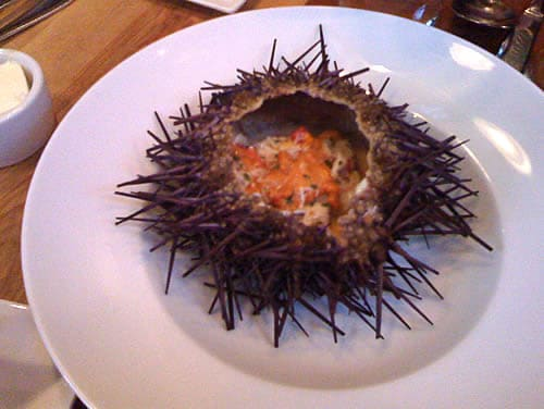 Sea Urchin Appetizer