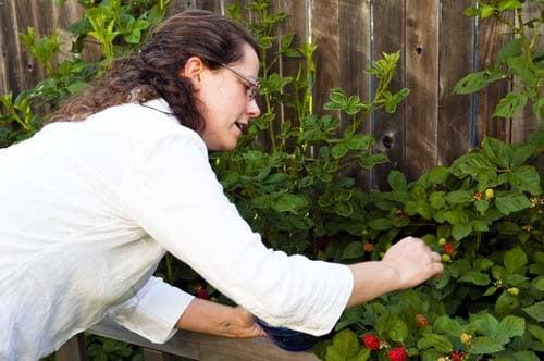 Home Grown Blackberries