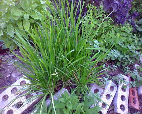 Grow herbs at home