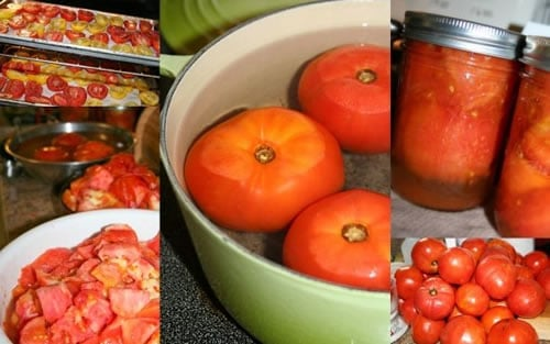 Preserving Winter Tomatoes