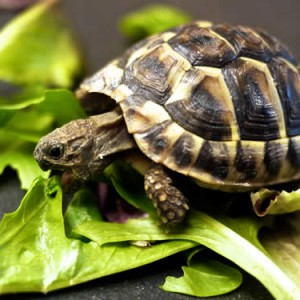 Turtles Eat Slowwwly.