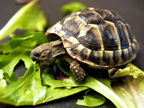 Turtles Eat Slowwwly.