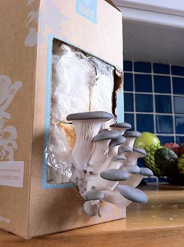 Do it yourself mushroom kit