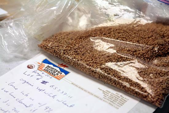 Organic Soft White Wheat samples