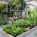 Sustainable Eats' Garden