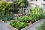 Sustainable Eats' Garden