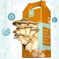 DIY Mushroom Kit