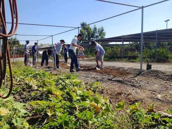 Planting in the urban farm