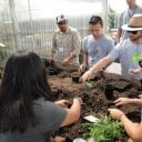 Planting Seedlings for the Greenhouse