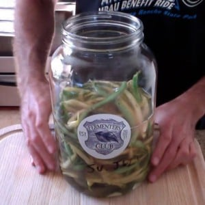 Fermented Dilly Beans