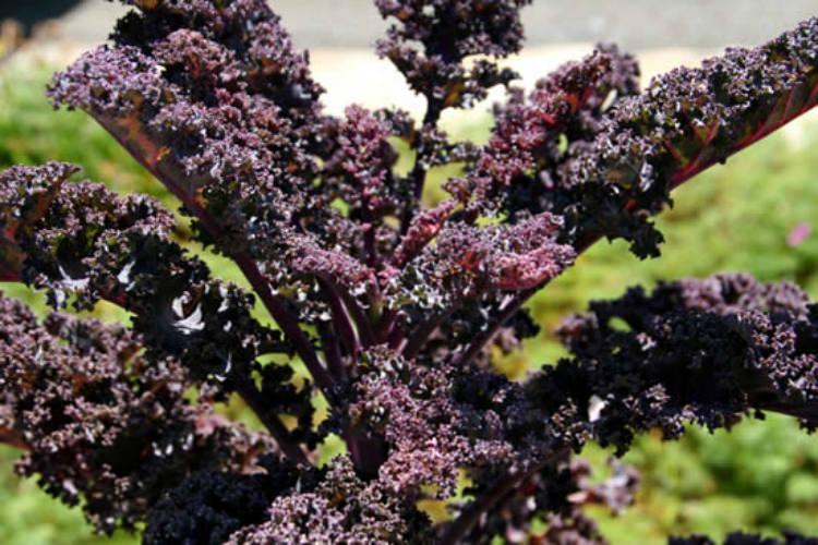 grow-your-own-kale edit_mini
