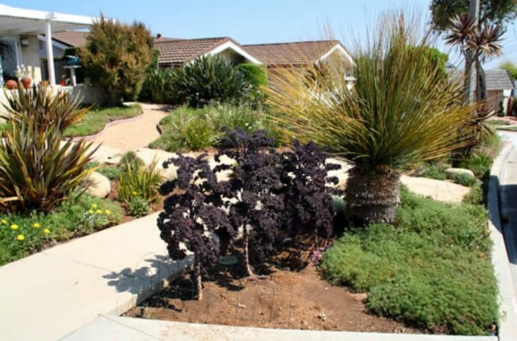 growing-kale-in-your-front-parkway-1_mini