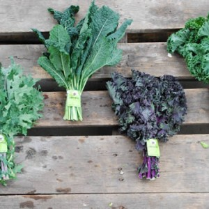 Red Russian Kale, Lacinato Kale, Redbor Kale, Green Scotch Kale