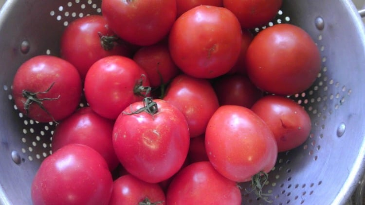 tomatoes-in-collandar-recipe