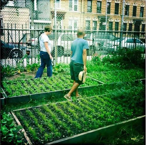 Urban Farming
