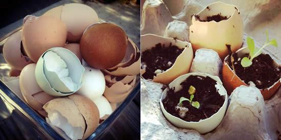 Chicken Egg Crafts