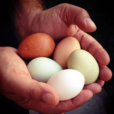 Morning Eggs