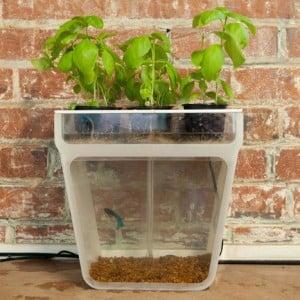 Home Aquaponics Garden Kickstarter Project