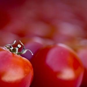 Eat Tomatoes in Season