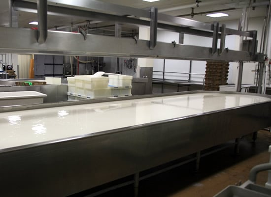 950 Gallons of Goat Milk about to become Feta