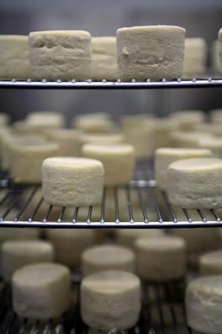 Cheeses in the aging cave