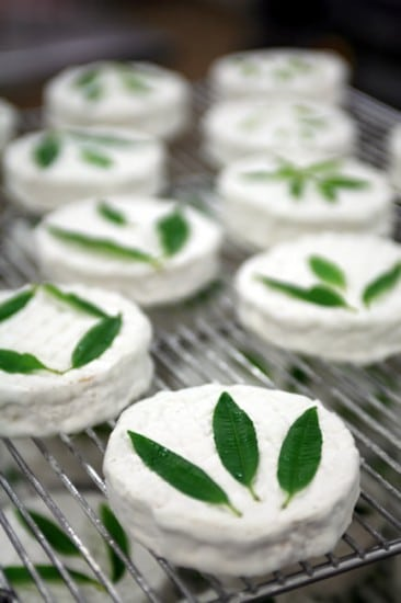Cameo with fresh herbs