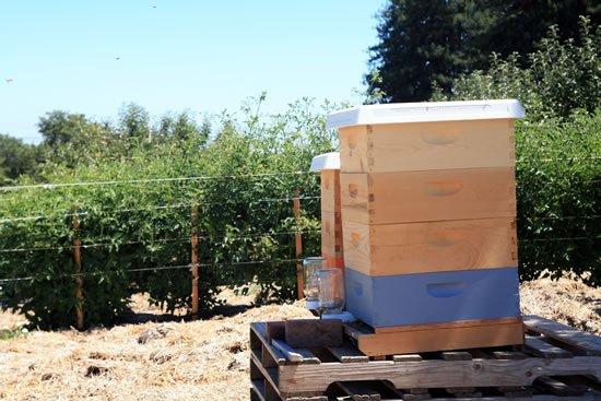 Redwood Hill Farm - Beekeeping