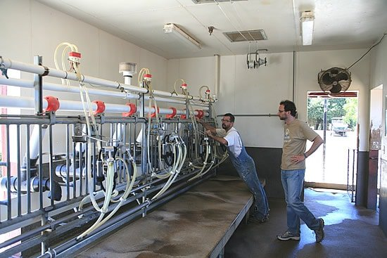 Redwood Hill Farm's Milking Room