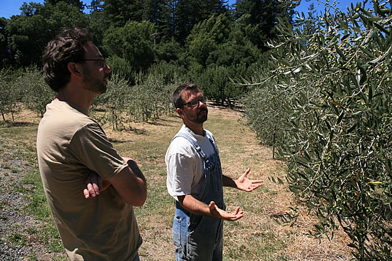Scott shows us the Olive Trees