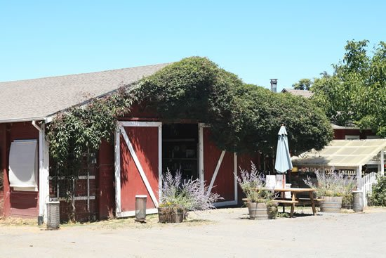 A Tour of Redwood Hill Farm