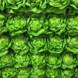 Grower Pete's Wall of Butter Lettuce