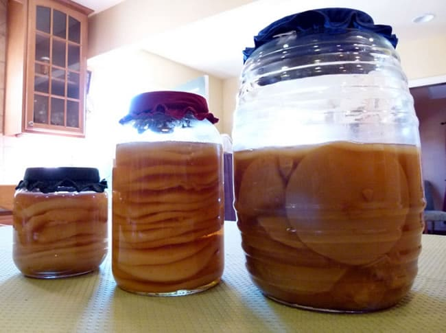 SCOBY Hotels