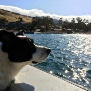 Molly enjoying Catalina Island