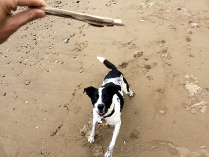 Do you want the stick?