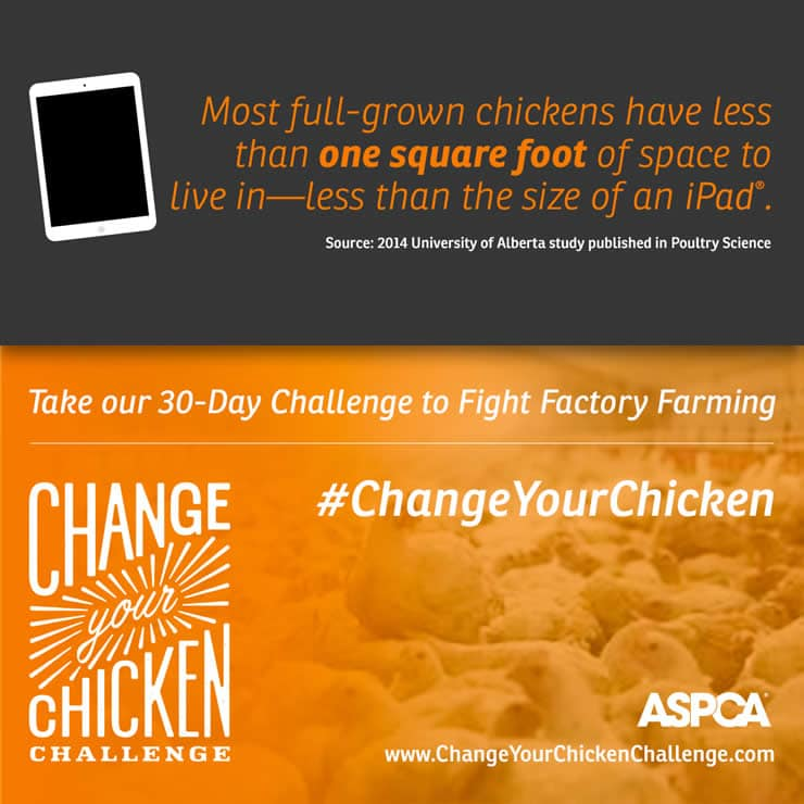 Change Your Chicken