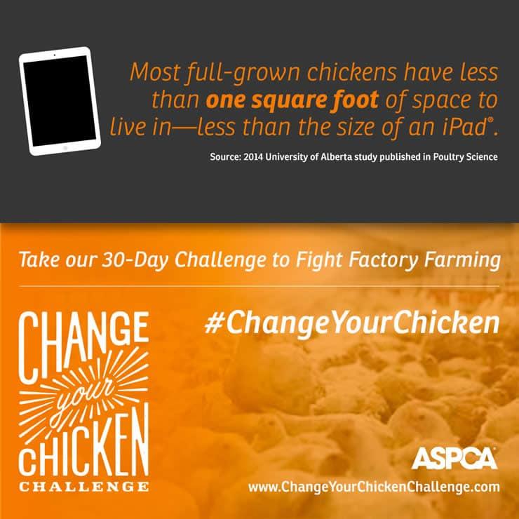 Change Your Chicken