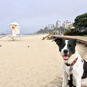 Molly at Laguna Beach