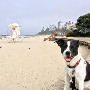 Molly at Laguna Beach